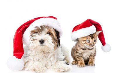 The Best Holiday Gift Ideas for Dog and Cat Lovers