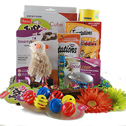 Cat�in Around - Cat Gift Basket